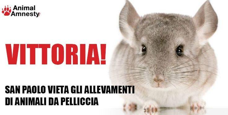 VITTORIA: SAN PAOLO VIETA ALLEVAMENTI DI ANIMALI DA PELLICCIA