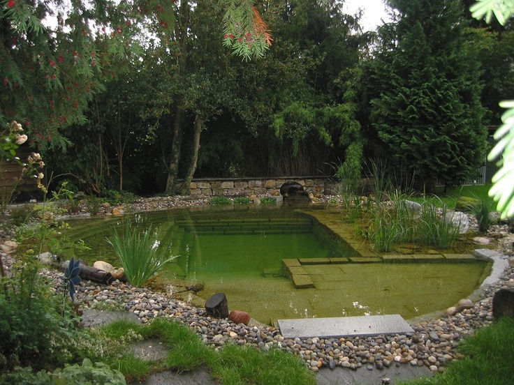 384 best images about natural pools on pinterest swim for Natural pond edging ideas