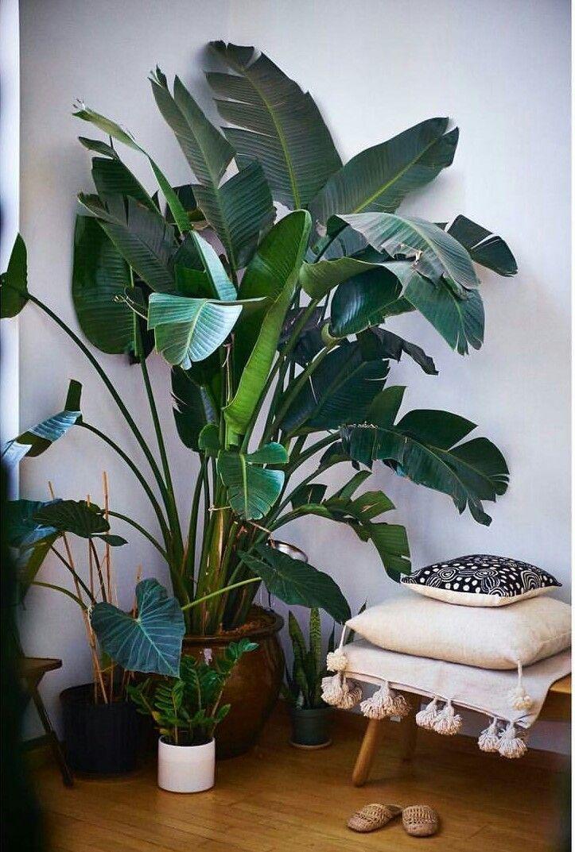 Les 12839 meilleures images du tableau urban jungle for Plante jungle