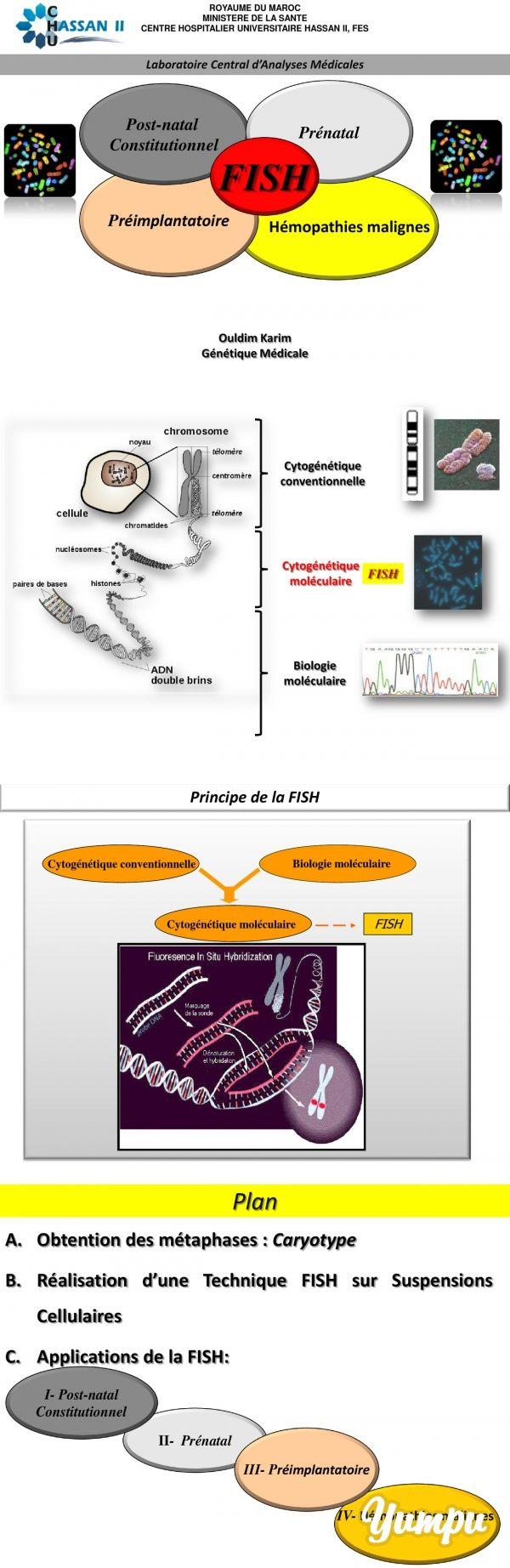 Plan cellule dynamis sur defender - Cytog N Tique Mol Culaire L Hybridation In Situ Fluorescente Cytog N Tique Mol Culaire L Hybridation In Situ