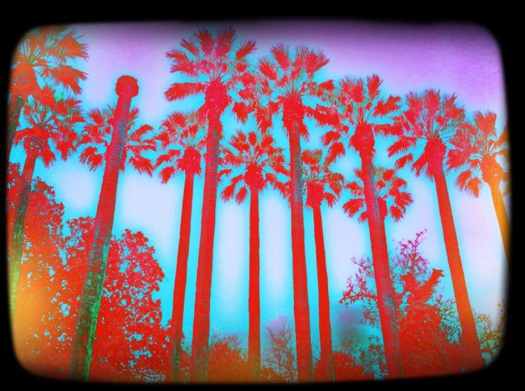 Palm-tree lane