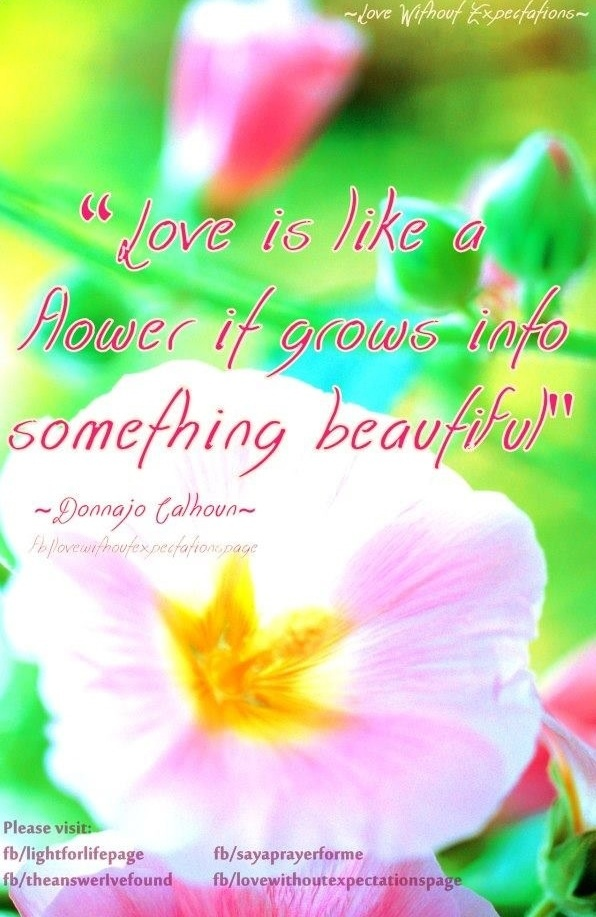 Flower Quote Floral Quotes Pinterest Flower Quotes Quotes And