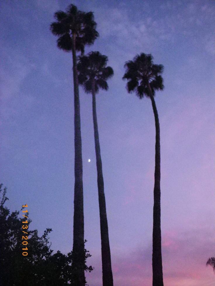 My palm trees