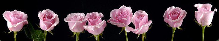 Скинали - Розовые розы на черном фоне