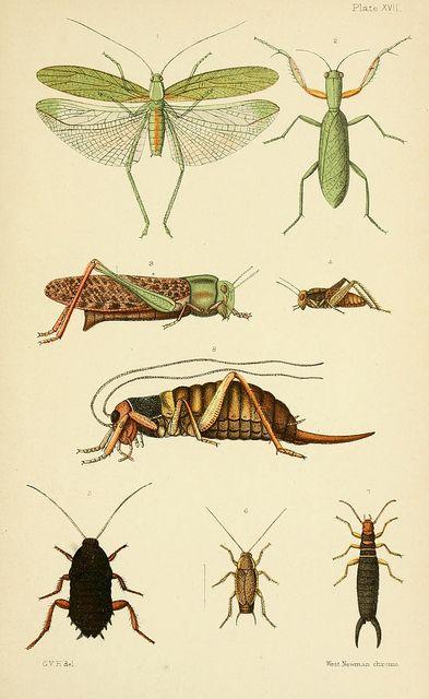 An elementary manual of New Zealand entomology;.  London,West, Newman  Co.,1892..