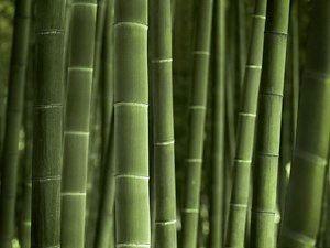 New Zealand Bamboo
