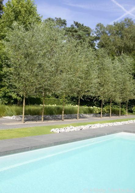 Buitenzwembad in minimalistische tuin, Starline zwembad