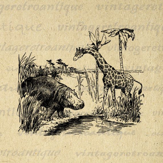 Hippo and Giraffe Digital Image