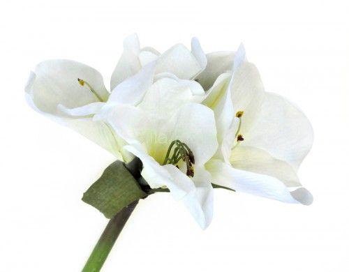 Amarylisy kwitnące w okresie świątecznym (jak niewiele innych kwiatów) wpisały się w wachlarz dekoracji bożonarodzeniowych. Duży sztuczny amarylis (85 cm) w kolorze białym z VillaFlora.pl