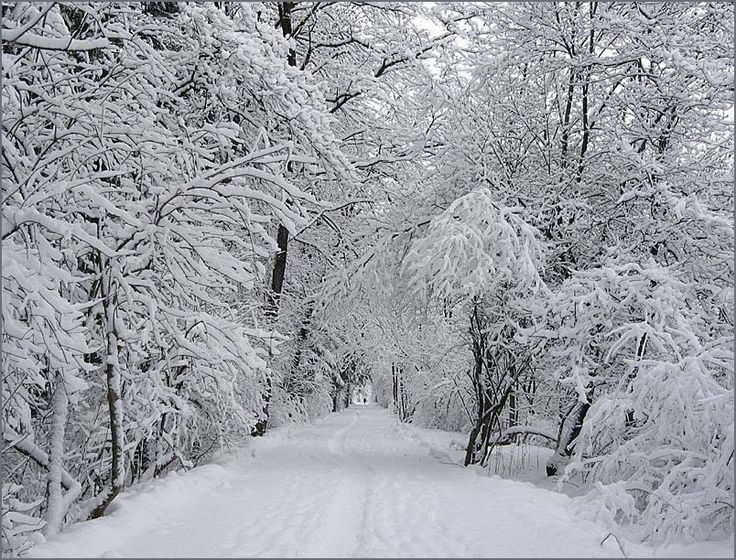Winter im Spreewald Deutschland 2002