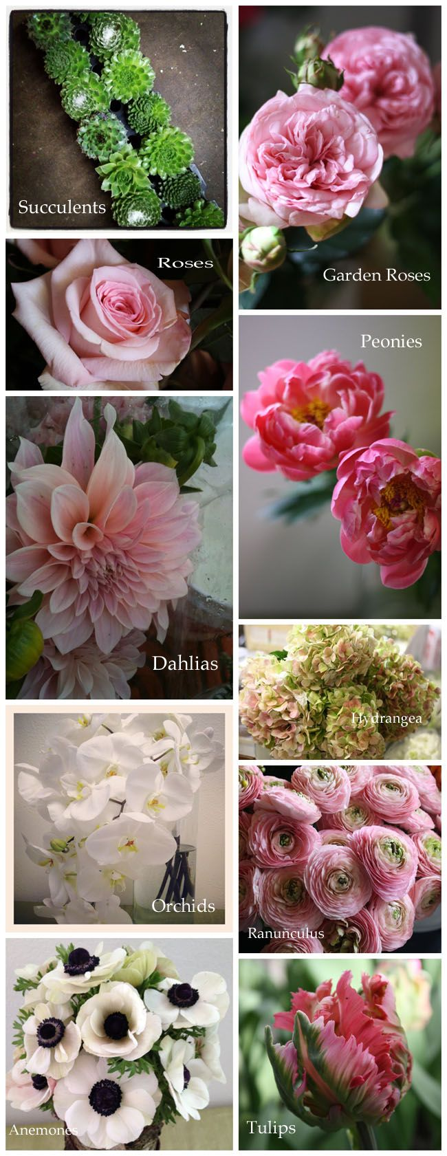 Garden roses, succulents and peonies are popular in 2013.   Garden Roses are a nice alternative if Peonies are not available.  Hydrangeas are lovely in  arrangements but don't hold up well in bouquets in the summer tropical heat.  Orchids always do well, and there are many types and varied prices
