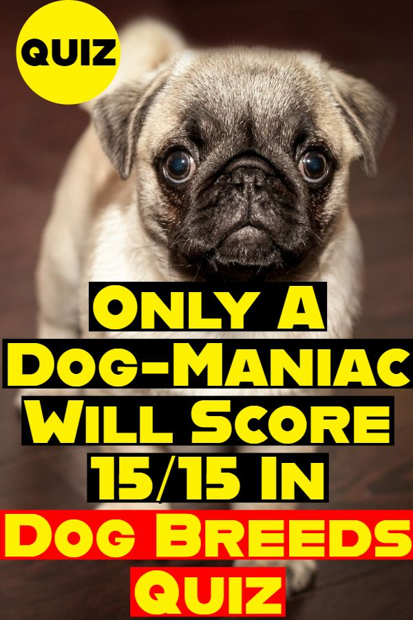 Dog Breeds Quiz In taking our quiz, you need to get the