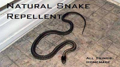 Mix 1 Gallon of white vinegar, 1 cup of salt & 2 tablespoons of Blue Dawn dish detergent. Pour into spray bottle. Spray around outside of home near openings and where ever snakes hang out.