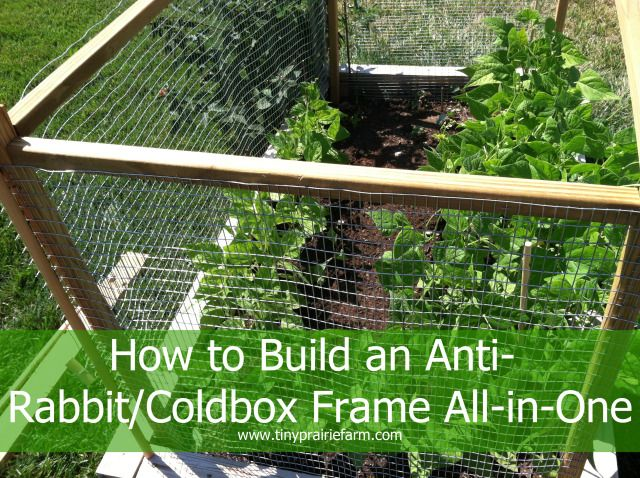 how to build an anit rabbit coldbox gardening tips i