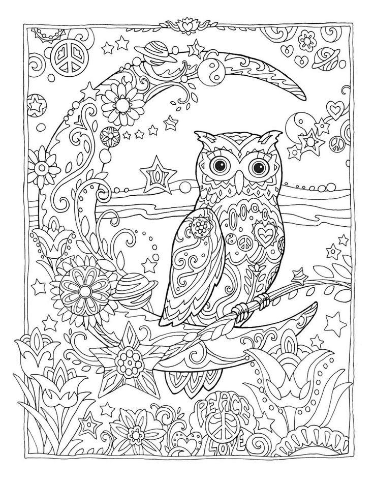 Icolor owls owl sitting on crescent moon · owl picscoloring booksadult