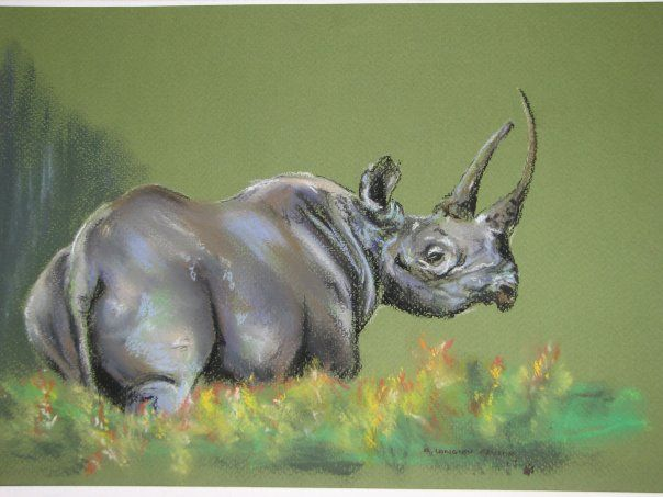 Black Rhino - pastel on paper