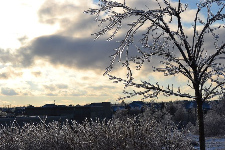 Ice on the branches after the Toronto Ice Storm 2013   #winter #winteriscoming #ice #icestorm #toronto #Canada #photography #weather #1 #ppixxells