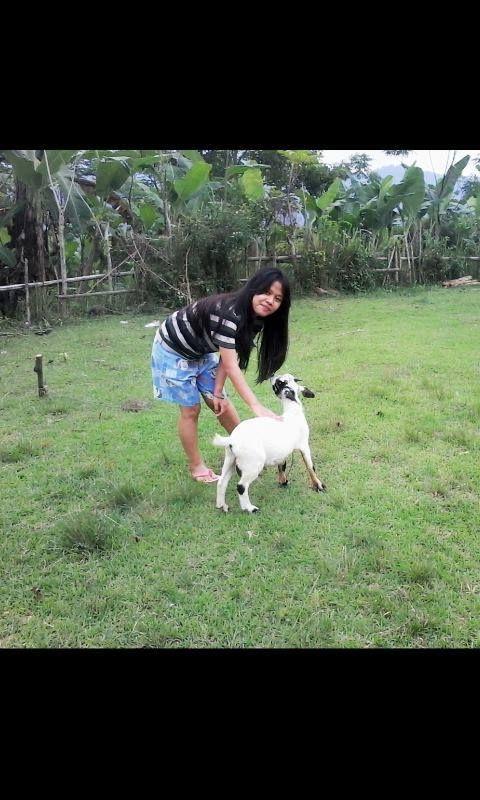 Foto kiriman Ella Nandha  Ini adalah kambing kesayangan ku, namanya cimin, setiap hari dari siang sampe sore aku ajak dia makan di lapangan biar dia kenyang, tapi sayang nya aku pindah ke jakarta jadi dia aku tinggalin , tapi sekarang dia di urus sama nenek & kakek ku.   #AnimalLoversEMCO
