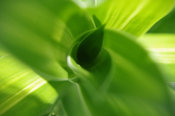 #macro #macrophotography #closeup www.facebook.com/xrphotographic