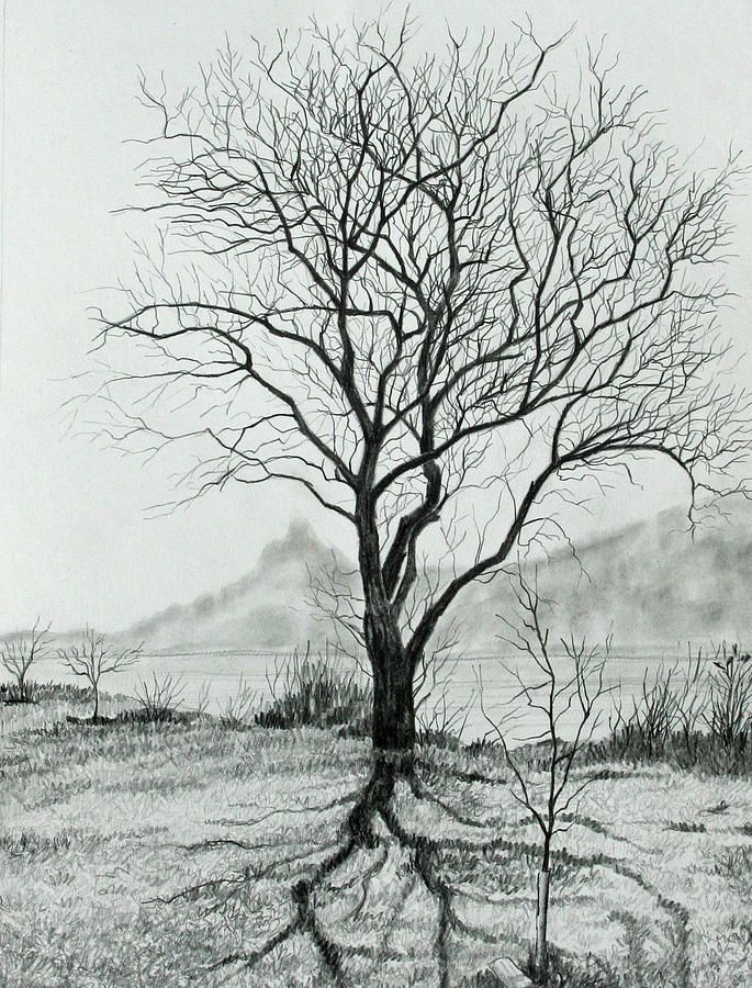 Tree Of Life by Mary Singer - Tree Of Life Drawing - Tree Of Life ...