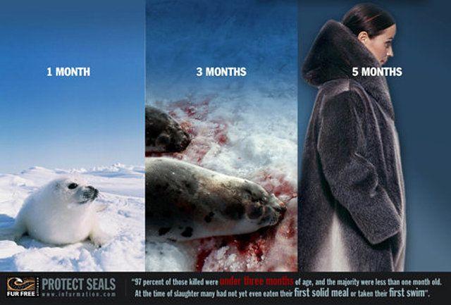 animales maltratados focas - Buscar con Google
