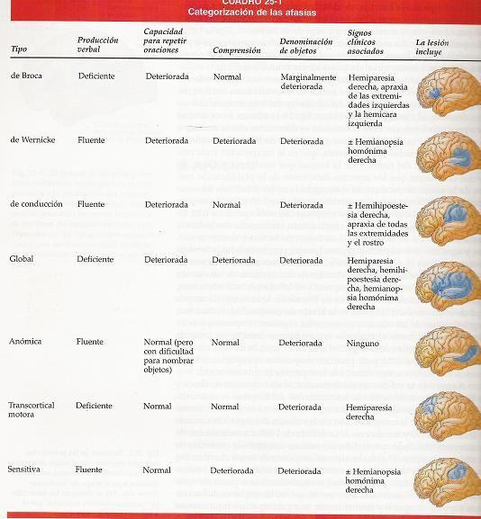 Practica el lenguaje aprendiendo adultos cerebrales