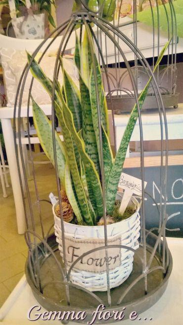Sanseveria in vaso di latta, vimini e juta; gabbia decorativa da appoggio in ferro battuto
