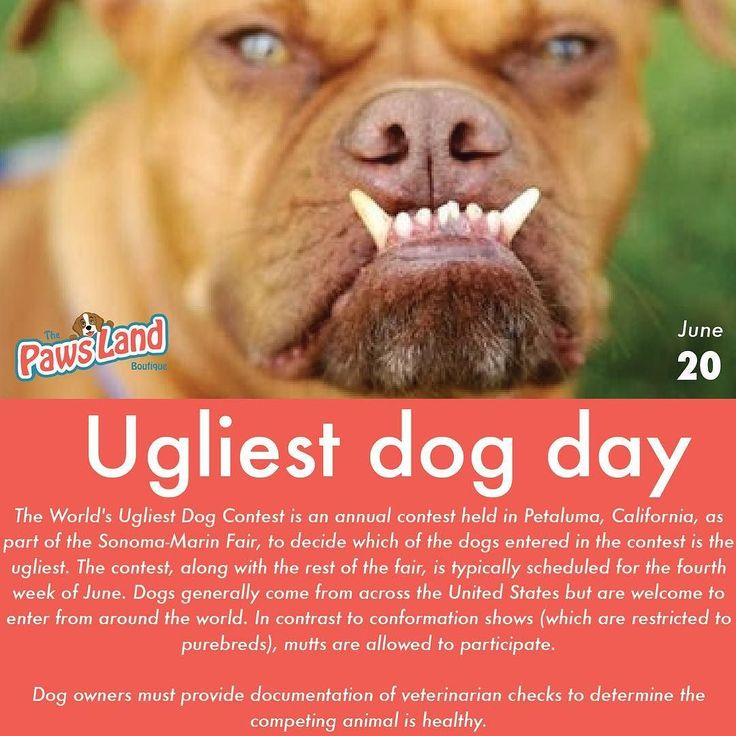The #ugliestdogday was born from The dog Ugliest Dog Contest in Petaluma California  The World's Ugliest Dog Contest is an annual contest held in Petaluma California as part of the Sonoma-Marin Fair to decide which of the dogs entered in the contest is the ugliest. The contest along with the rest of the fair is typically scheduled for the fourth week of June. Along with the title of The Worlds Ugliest Dog the winners owner receives a check for $1000 and a trophy.