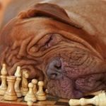 Do it Yourself Hundespiele | viele diy ideen