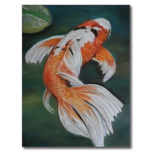 1110 best koi pond 39 s and koi art related pic 39 s for Purple koi fish for sale
