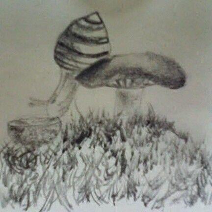 Lumaca su fungo