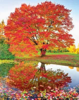 Leaves. Reflections. And the glorious colors of fall! Maple Reflections, a 1000-piece jigsaw puzzle by Springbok Puzzles.