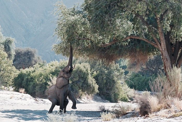 One of the entries received during the first week of our exciting new Wilderness Moments Photo Competition - Elephant in the Hoanib River bed by Henry Shin