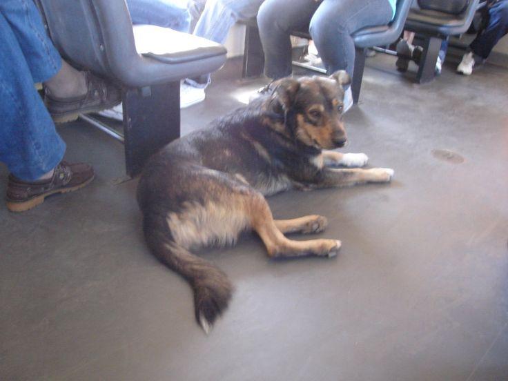 ¿Cómo viajar con perros? Ideas y consejos - http://vivirenelmundo.com/viajar-con-perros/25200