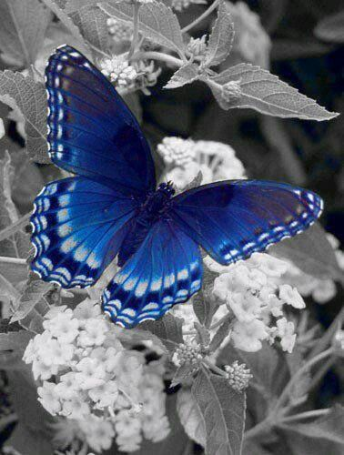 Butterfly #BlueButterfly #Wildlife #Nature                                                                                                                                                     More