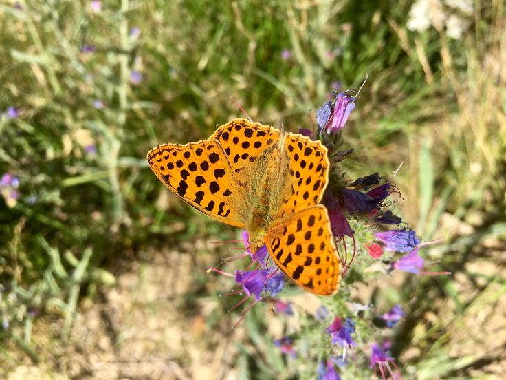 I'm in awe of the butterflies, caterpillars and other insects around me. The colours, the erratic movement which I'm sure makes perfect sense to them. Bright blues, deep oranges and vibrant and electric green; going about existence in the only way they know how. Survival, freedom, life.