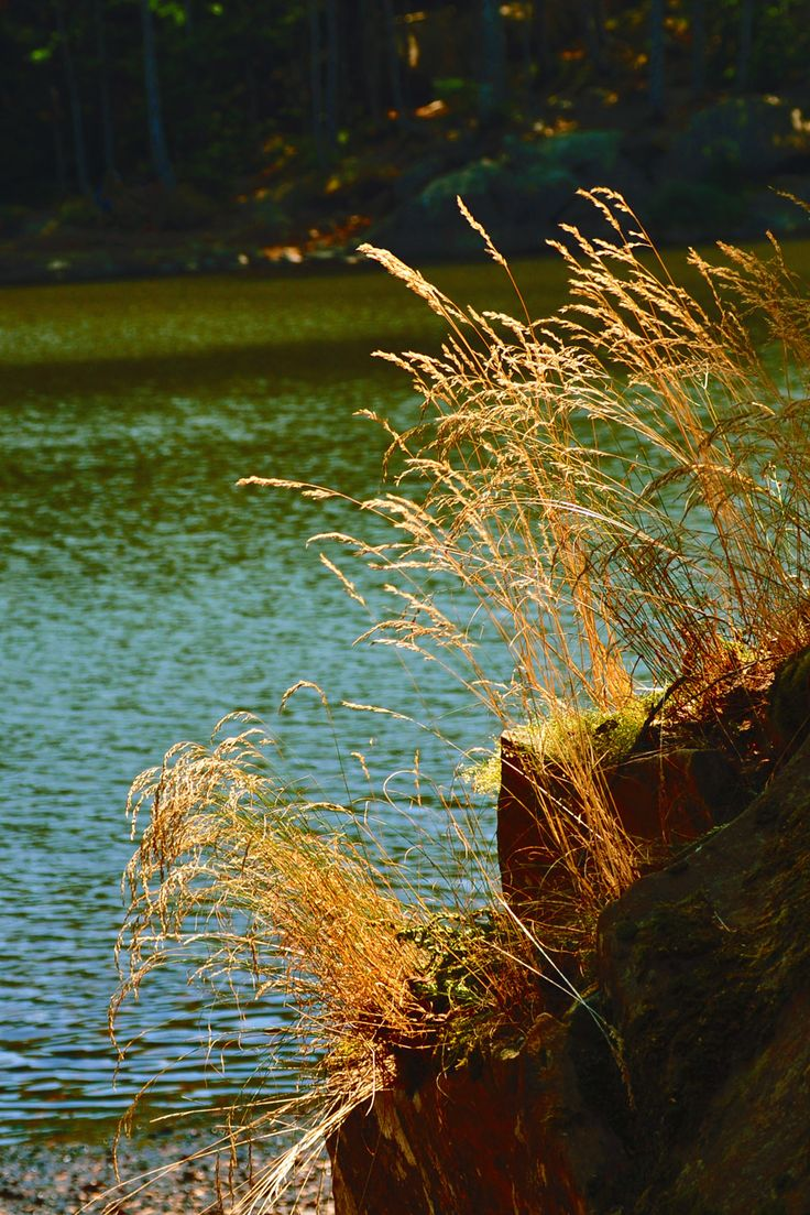 High Val Parma Forest  - The Lagoni Golden threads on lake