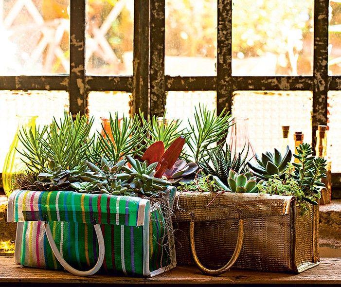Para criar um jardim, você sequer precisa de vasos. Sacolas de feira são perfeitas para suculentas. Por serem de tecido furadinho, elas são bem drenáveis. As espécies podem ser plantadas ali mesmo. Ideia de Claudia Regina