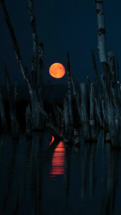 The moon in a mangroves world