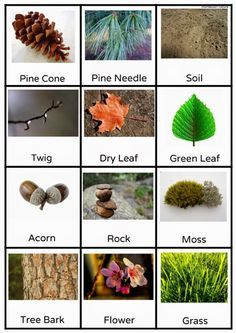 Nature Scavenger Hunt – Montessori Nature