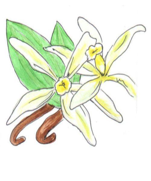 Эфирное масло Ваниль. Запах ванили помогает снять стресс, гнев и напряжение, избавляет от бессонницы.