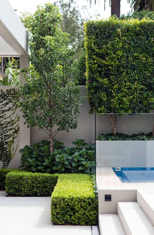 Clean lines, cutting edge steps and perfectly clipped architectural planting