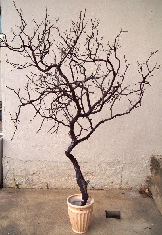 Manzanita Tree Add Moss Or Rocks In The Vase Flowers To