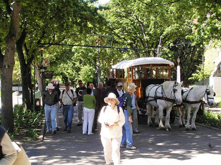 Horses and carriage in Government Avenue, Company's Garden