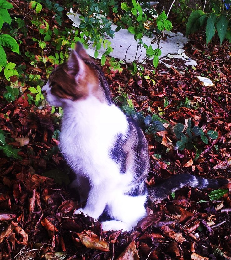 young stray kitty sep 2013