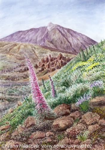 Echium wildpreetii and Pico del Teide. Watercolor by Jana Haasová