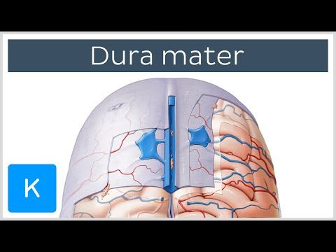 Dura mater (meninges of the brain) - Human Anatomy | Kenhub - YouTube