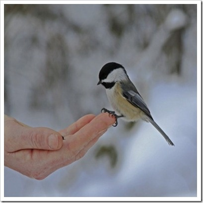 Birds eat from hands up here in Grey Bruce