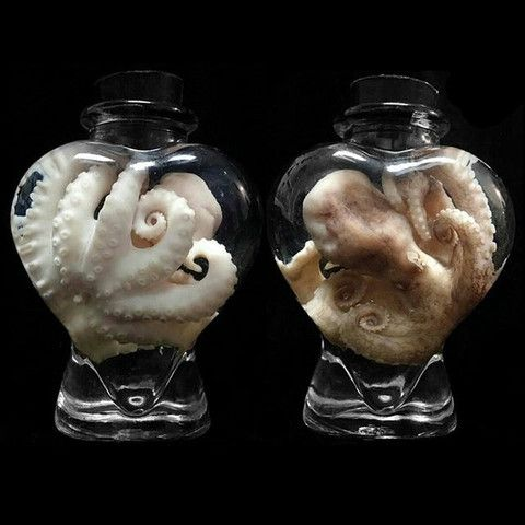 Heart Jar Octopus Specimen $65.00 - Pinned by The Mystic's Emporium on Etsy