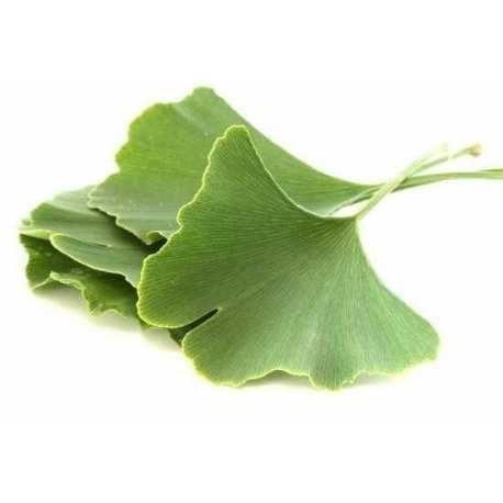Βότανο ενίσχυσης για την καρδιά και για το νου σας! - Αγνή ανεπεξέργαστη σκόνη από φύλλα γκίνγκο μπιλόμπα - Pure raw ginkgo biloba powder